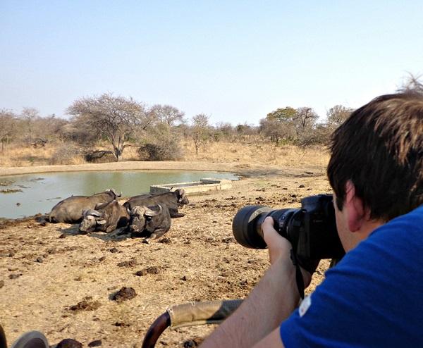 zuid-afrika-buffels