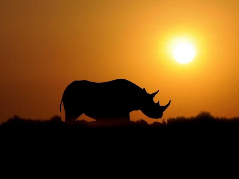 rhino-sunset