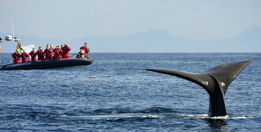 Walvissen kijken Noorwegen, Voigt Travel