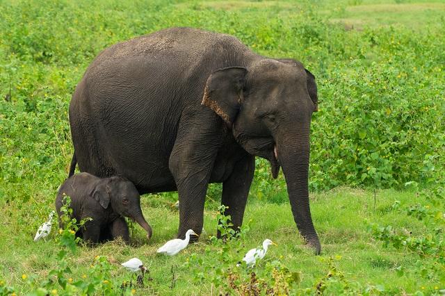 national park sri lanka