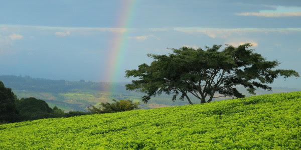 landschap malawi