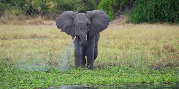 wildlife malawi