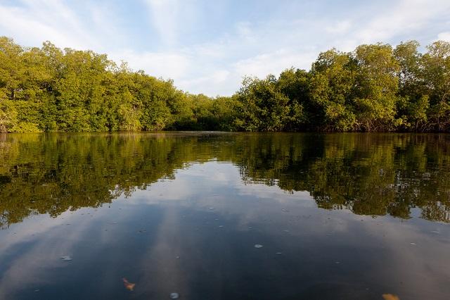 Manglares de Tumbes, de mangroven van Tumbes