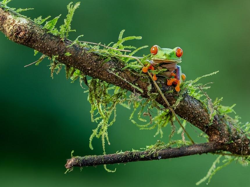 Big-Five van Costa Rica in Monteverde Cloud Forest Reserve