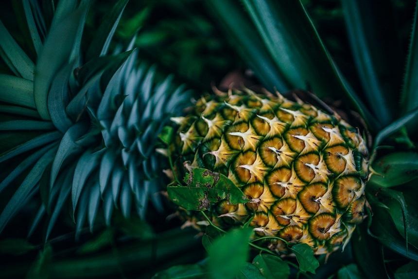 Ananas uit Costa Rica