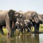 Olifanten Liwonde National Park