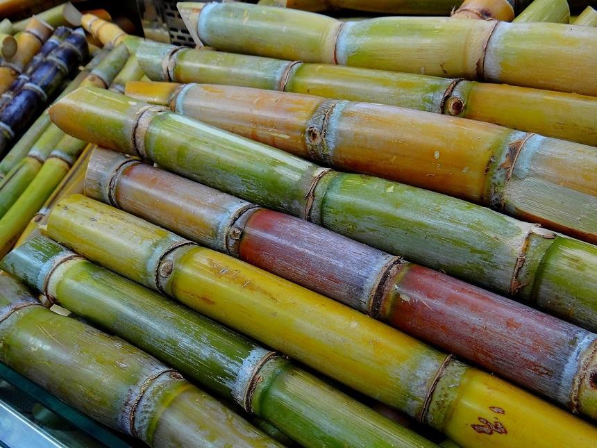 Suikerrietplantages in Costa Rica