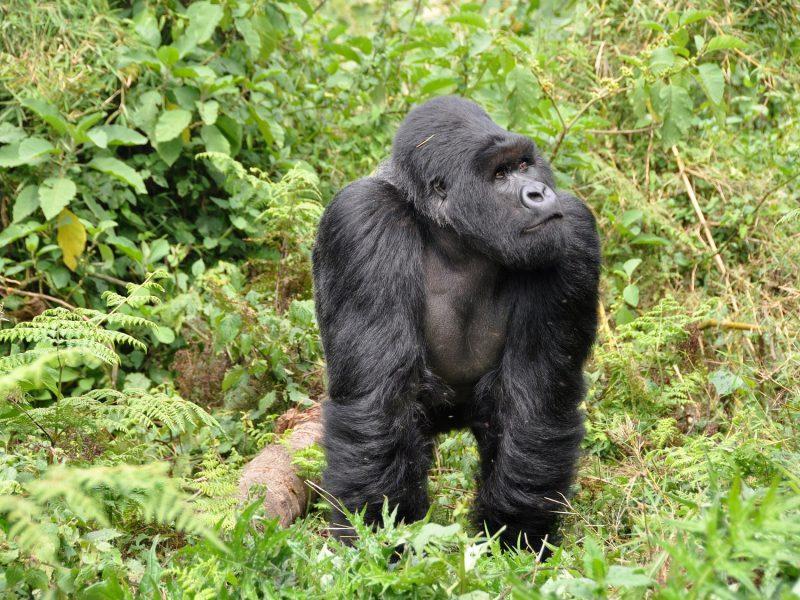 bijzonder overnachten in Rwanda