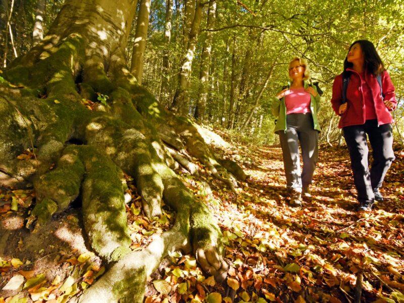 wandelen door het Naturerbe-Wald © Teutoburger Wald Tourismus, F. Grawe